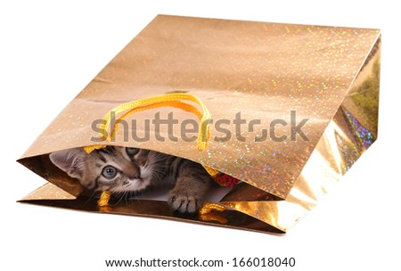 Little kitten in package isolated on white - stock photo