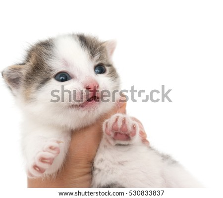 little kitten in the hand
