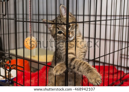 Little kitten in the shelter, elegantly posing in a cage