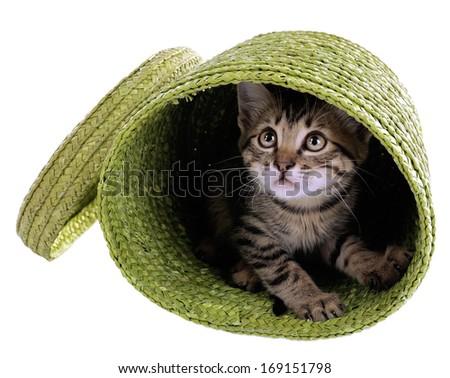 Little kitten in wicker basket isolated on white - stock photo