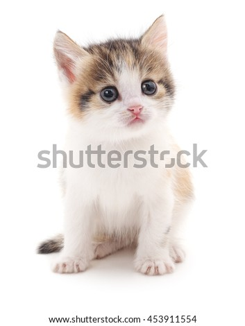 Little kitten isolated on a white background.