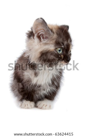little kitten isolated on white