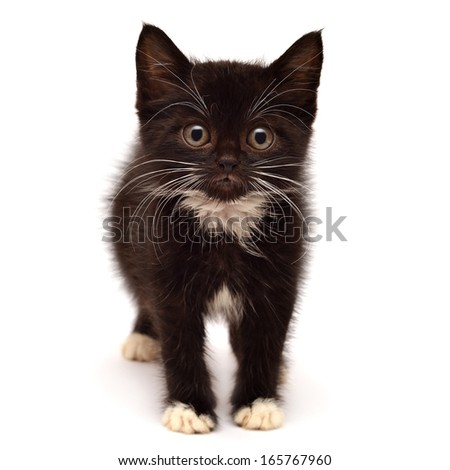 Little kitten isolated on white background - stock photo