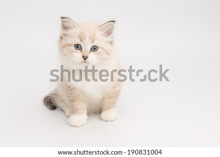 little kitten looking at camera