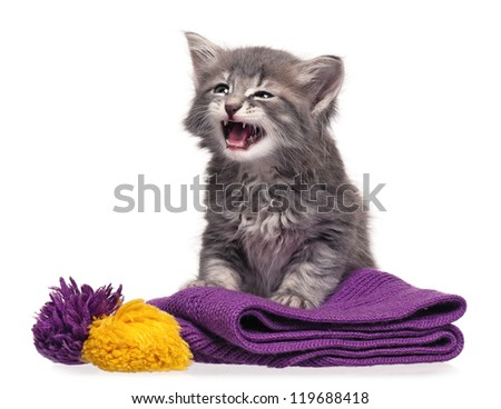 Little kitten on a knitted scarf isolated on white background