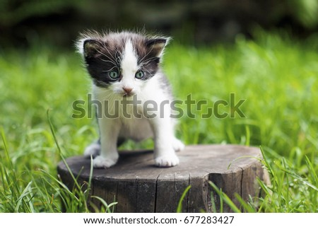 Little kitten on a stump in the middle of a grass.
