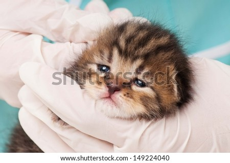 Little kitten on a treating at the veterinary clinic close-up - stock photo