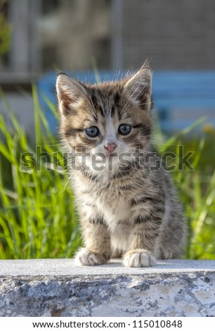 little kitten on green background - stock photo
