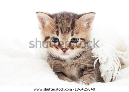 little kitten on white bedspread