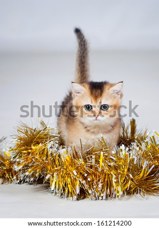 Little kitten photo in studio with christmas decorations - stock photo