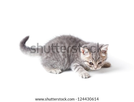 Little kitten playing catch something. Isolated on white - stock photo