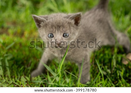 Little kitten playing on the grass close up