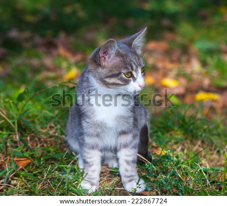 little kitten playing on the grass roadside in morning.