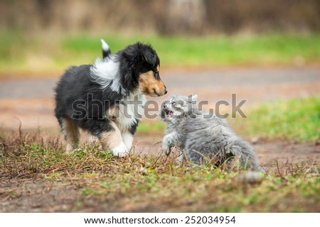 Little kitten playing with rough collie puppy - stock photo