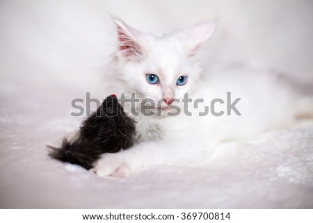 Little kitten playing with toy mouse - stock photo