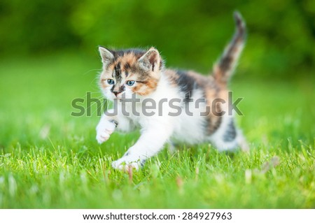 Little kitten running outdoors in summer