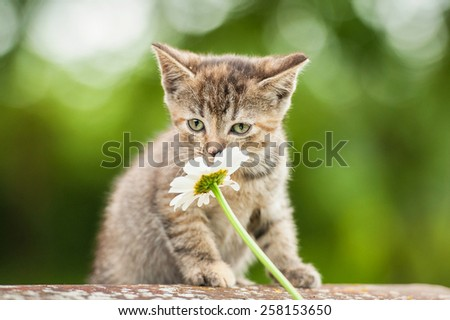 Little kitten smelling a flower - stock photo