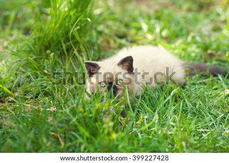 Little kitten sneaking in the grass