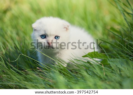 Little kitten staying in a grass - stock photo