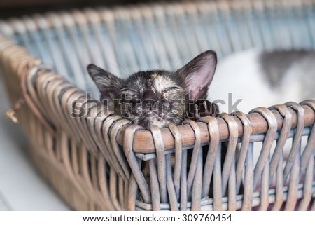 Little Kitten take a nap in the basket with the comfy face (Soft Focus) - stock photo
