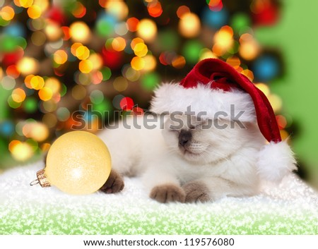Little kitten wearing santa hat sleeping against Christmas tree with lights