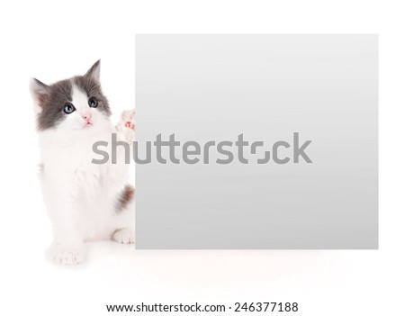 Little kitten with frame for text isolated on white - stock photo