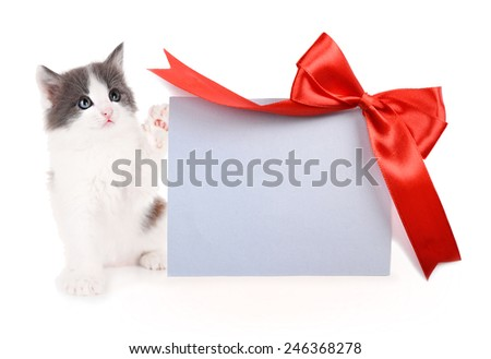 Little kitten with greeting card isolated on white - stock photo