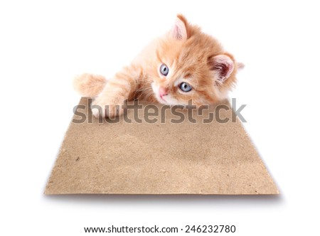 Little kitten with paper sheet isolated on white - stock photo
