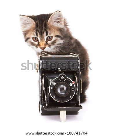 Little Kitten with photocamera, isolated on white background - stock photo