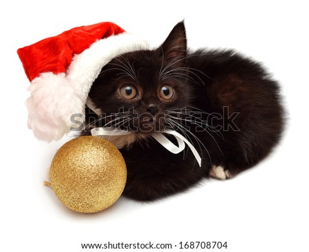 Little kitten with Santa Claus hat isolated on white background - stock photo