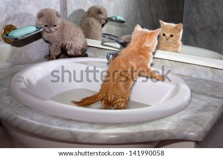 Little kittens bathing in the sink - stock photo
