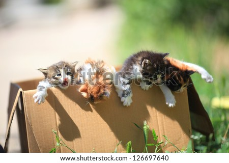 little kittens get out of a cardboard box - stock photo