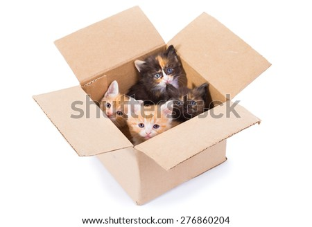 Little kittens in a cardboard box - stock photo