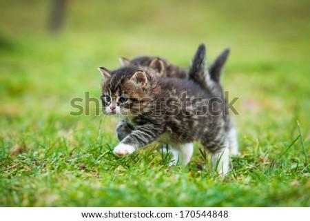 Little kittens running on the lawn - stock photo