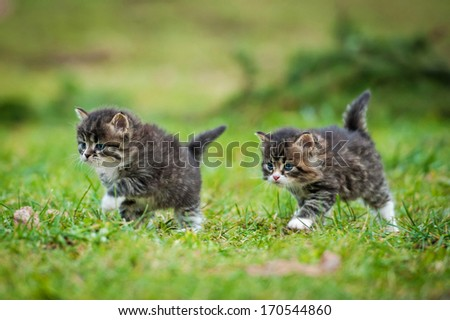 Little kittens running on the lawn - stock photo