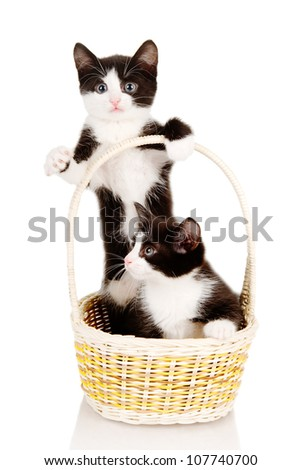 little kittens sitting in basket.  isolated on white background - stock photo