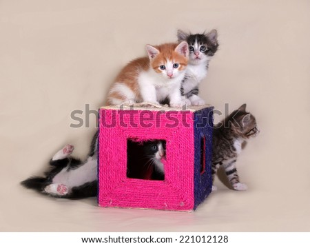Little kittens sitting on and around scratching posts on gray background - stock photo