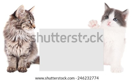 Little kittens with frame for text isolated on white - stock photo