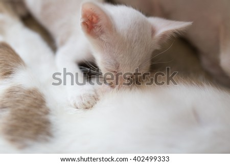 Little Kitty drinking milk form its mom