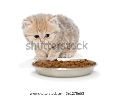 Little kitty eats dry food isolated on white