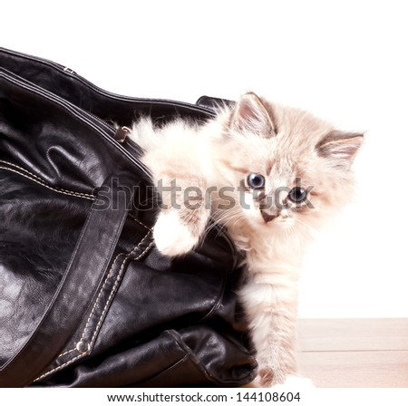 little kitty gets out of the bag - stock photo