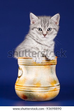 Little kitty in a bowl on blue background - stock photo