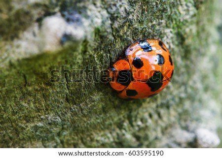 Little ladybug on brown space of macro photography