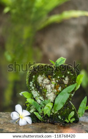 Little lotus flower and a small concrete ornament full of moss and leaves