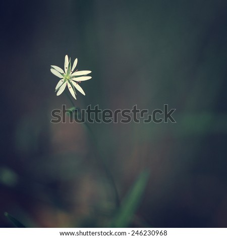 little meadow flowers on dark background of grass - stock photo