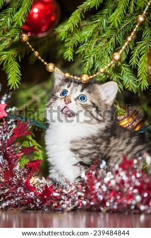 Little meowing kitten sitting near a christmas tree - stock photo