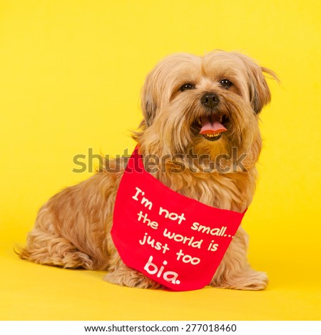 Little mixed breed dog with long hair on yellow background and the text not small but world is too big - stock photo
