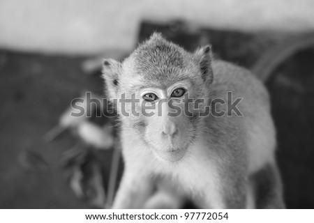 Little monkey - stock photo