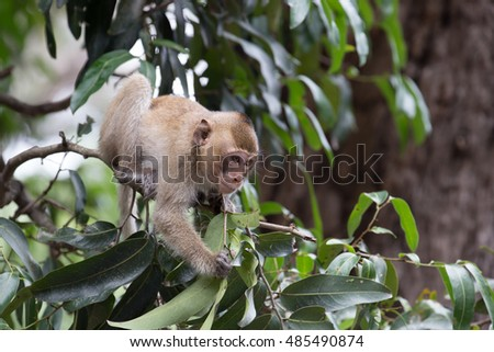 Little monkey playing on tree branch.
