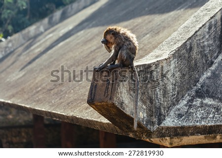 Little monkey sitting on the stone and washing her face - stock photo